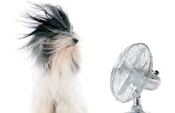 dog and a fan